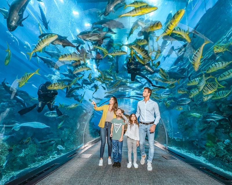 Dubai Aquarium And Underwater Zoo  Ticket