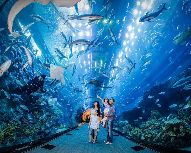 Dubai Aquarium And Underwater Zoo  Price