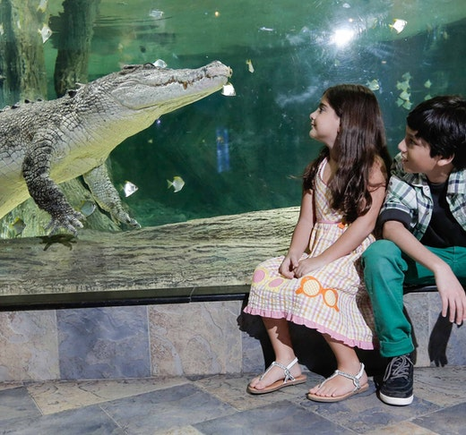 Dubai Aquarium And Underwater Zoo  Tripx Tours