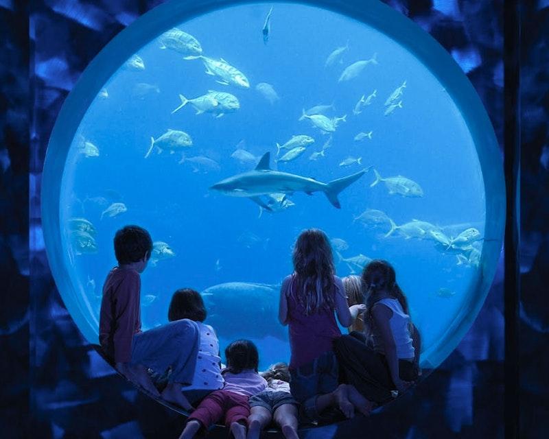 Aquaventure + Lost Chamber Aquarium   Discount