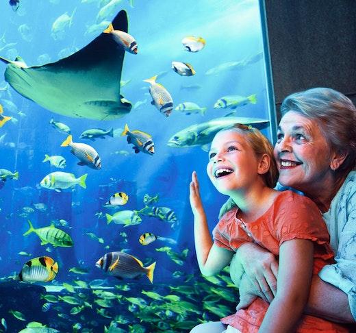 The Lost Chambers Aquarium  Price