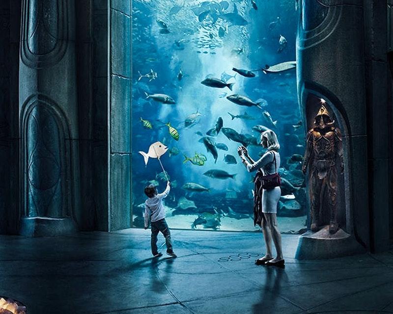 The Lost Chambers Aquarium  Discount