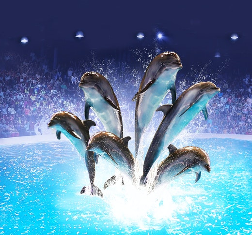 Dubai Dolphinarium - Dolphin & Seal Show Location
