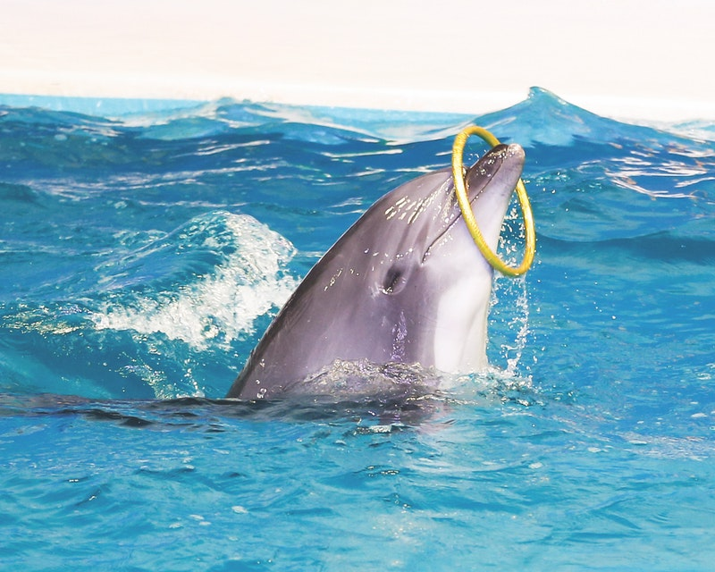 Dubai Dolphinarium - Dolphin & Seal Show Price