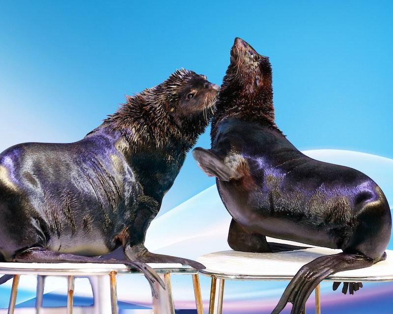 Dubai Dolphinarium - Dolphin & Seal Show Category