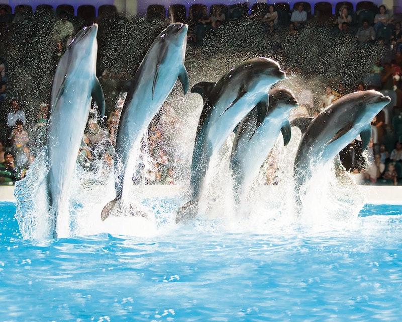 Dubai Dolphinarium - Dolphin & Seal Show Ticket