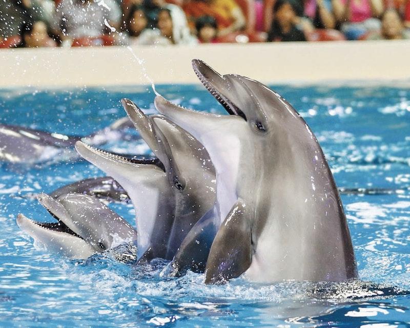 Dubai Dolphinarium - Dolphin & Seal Show Discount