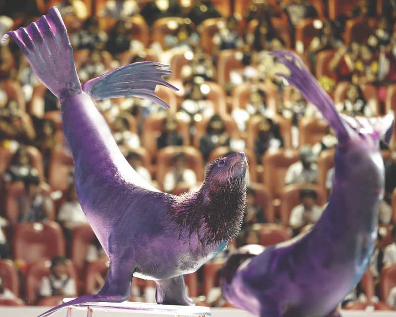 Dubai Dolphinarium - Dolphin & Seal Show