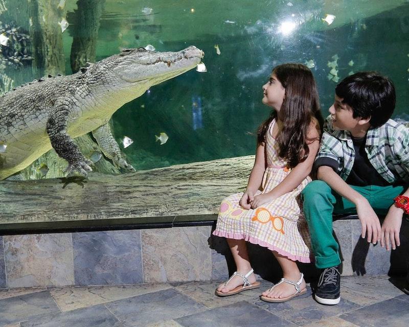 Burj Khalifa Level 124+125 + Dubai Aquarium and Underwater Zoo Discount