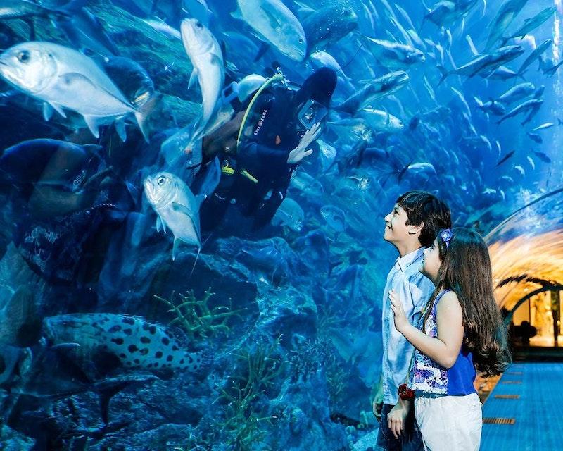 Burj Khalifa Level 124+125 + Dubai Aquarium and Underwater Zoo Location