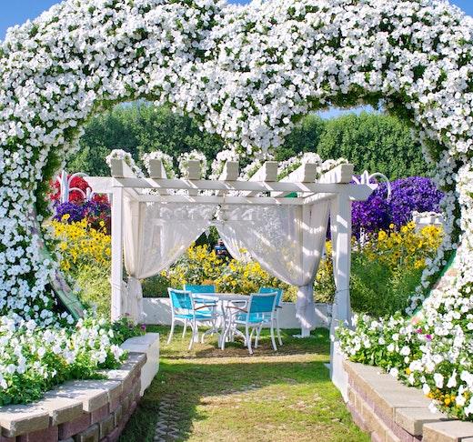 Dubai Miracle Garden Category