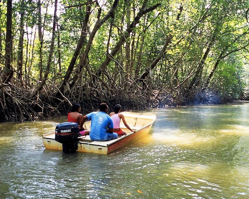 Mangrove Tour  Discount