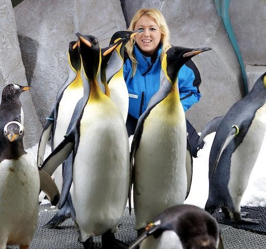 Penguin Encounter  Price