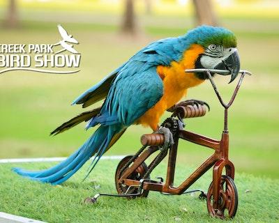Dubai Dolphinarium: Creek Park Exotic Bird Show Ticket