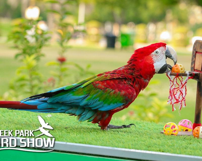 Dubai Dolphinarium: Creek Park Exotic Bird Show Price