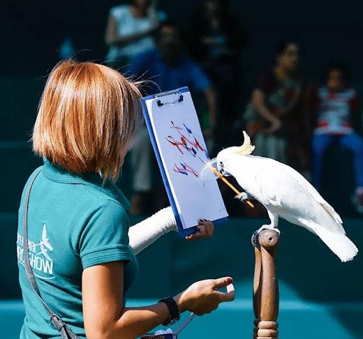 Exotic Bird Show Dubai