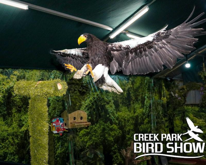 Dubai Dolphinarium: Creek Park Exotic Bird Show Discount