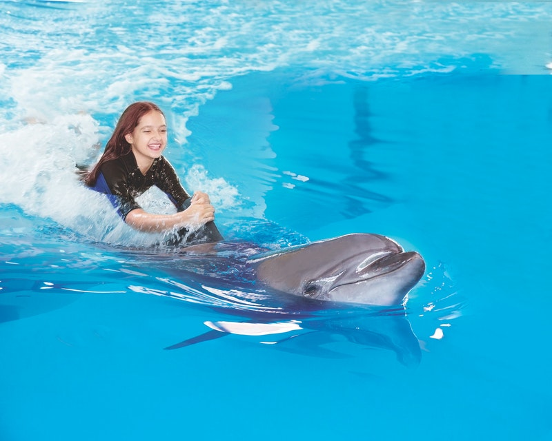 Dubai Dolphinarium: Swimming with Dolphins