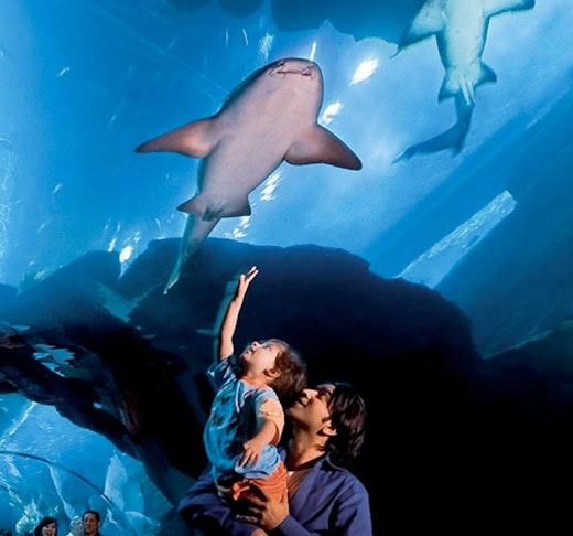 Dubai Mall Aquarium & VR Park Experience   Ticket
