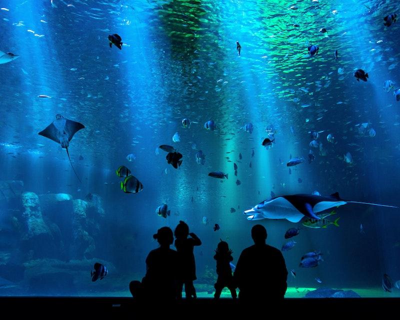 SEA Aquarium VIP Tours Price