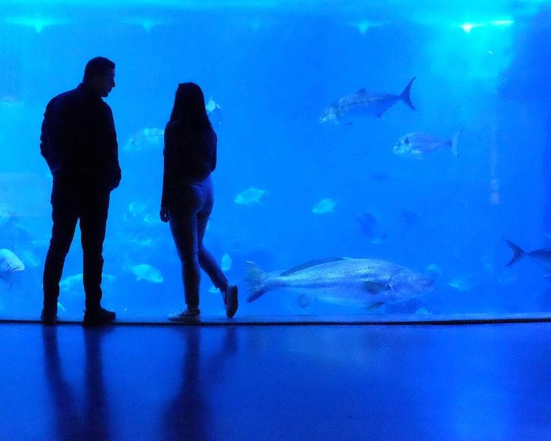 SEA Aquarium VIP Tours