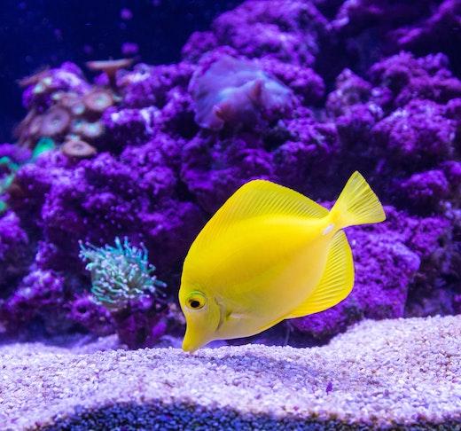 SEA Aquarium VIP Tours Ticket
