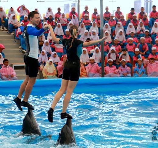Dolphin Bay - Phuket Dolphin Show Ticket Discount
