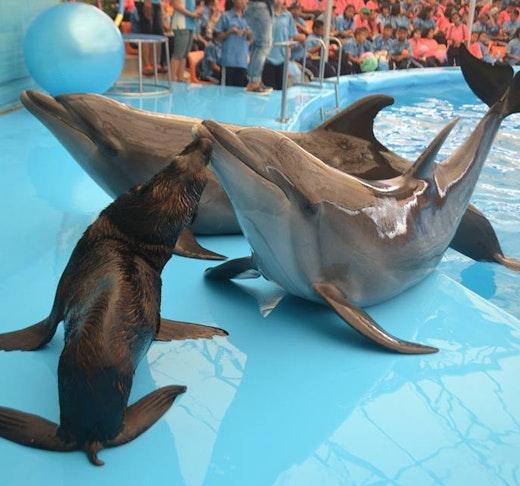 Dolphin Bay - Phuket Dolphin Show Ticket Location