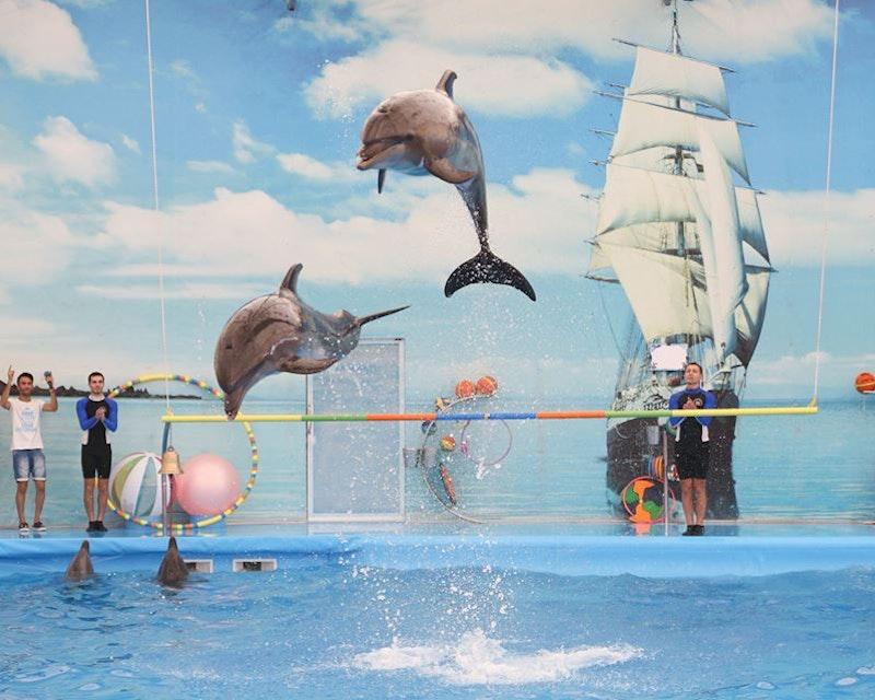 Dolphin Bay - Phuket Dolphin Show Ticket Price