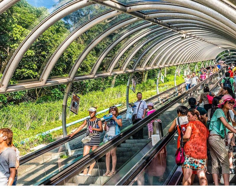 Hong Kong Ocean Park Category