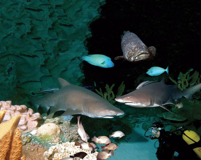 Aquaria KLCC Category