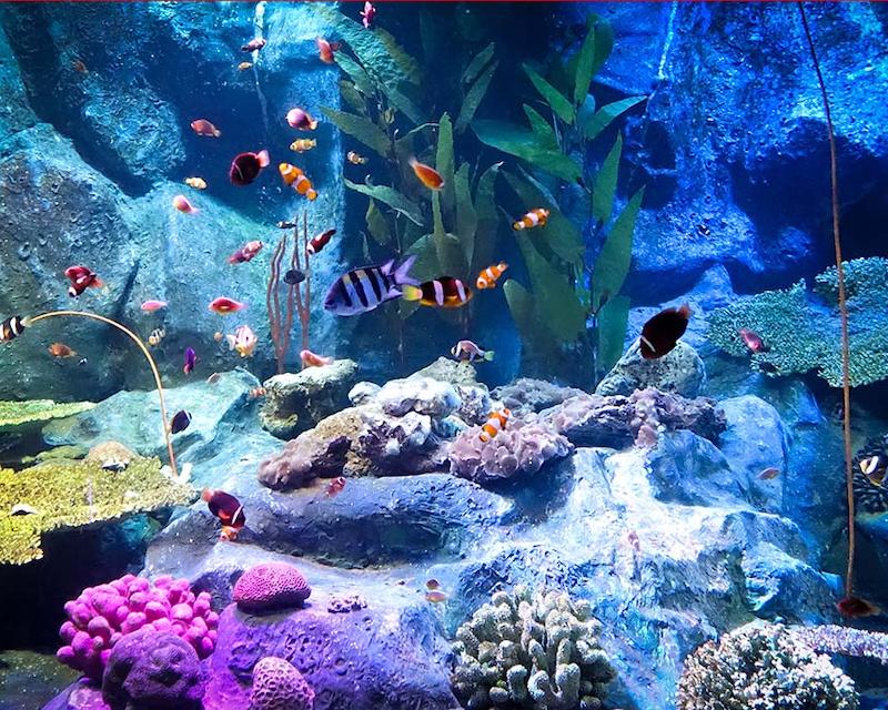 Underwater World Pattaya Category