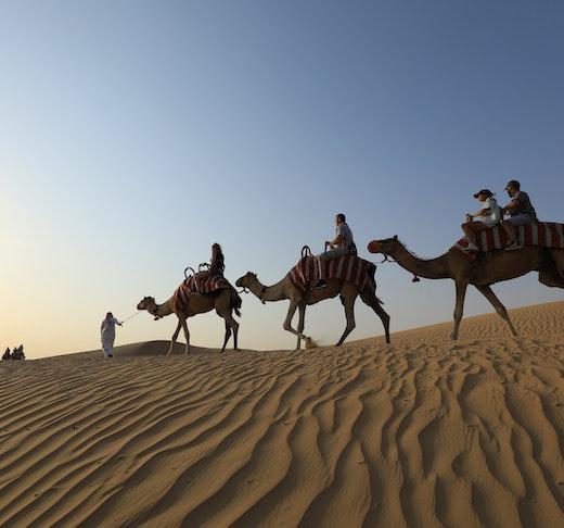 Premium Morning Quad Bike Sandboarding and Camel Ride Price