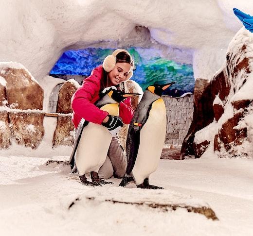 Ski Dubai - Snow Premium Pass Location