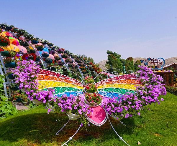 Dubai Butterfly Garden Ticket
