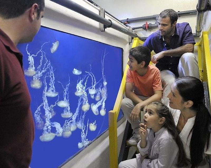 Atlantis Fish Tales Tour Discount