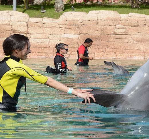 Atlantis Dolphin Photo Fun Price