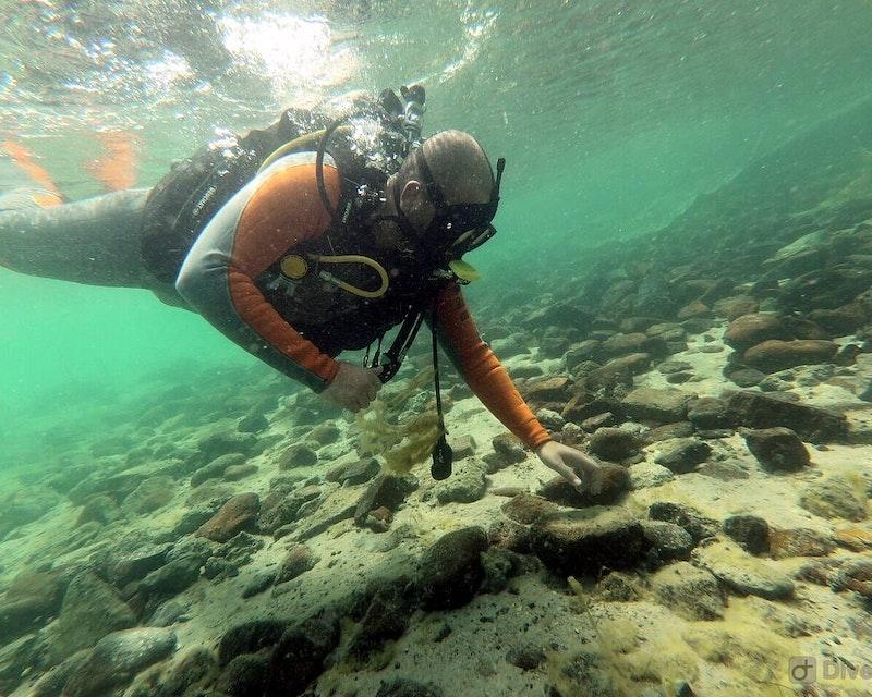 Scuba Diving Fujairah