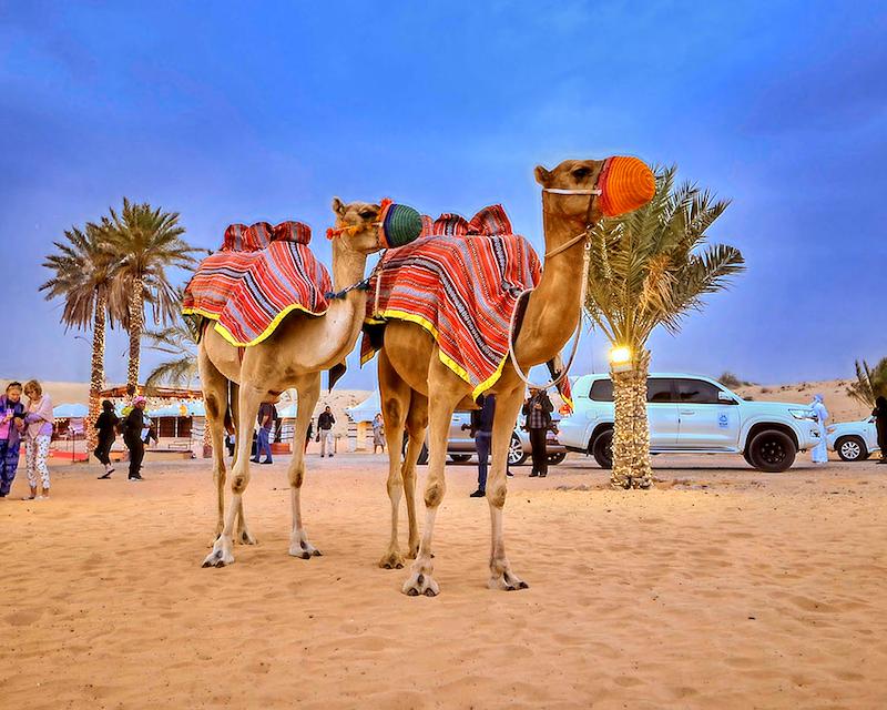 Caravanserai Bedouin Desert Dinner Experience Review