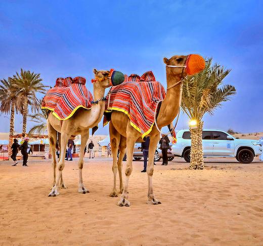 Caravanserai Bedouin Safari & Desert Dinner Experience Ticket